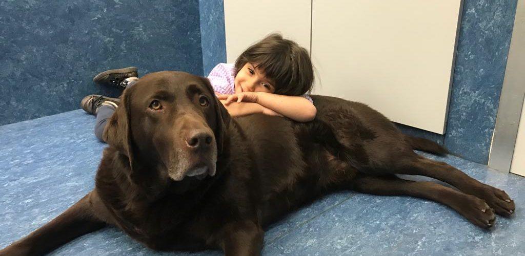 Terapia con animales en el aula TEA
